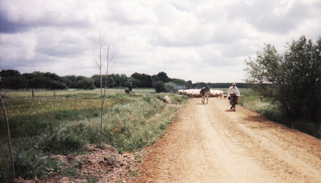 camino de santiago trail